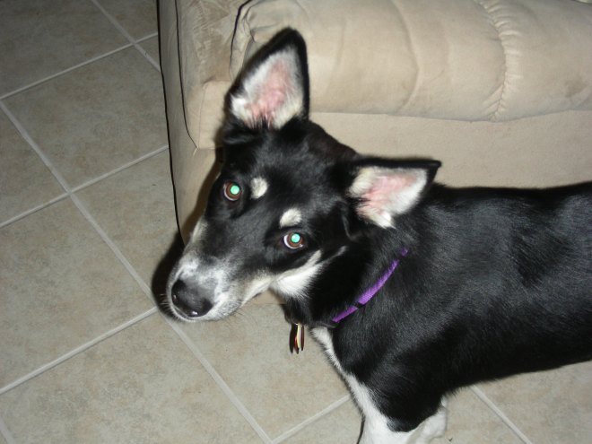 Anya's puppy face