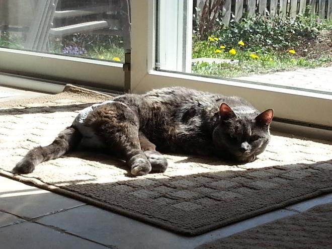 enjoying the rays
